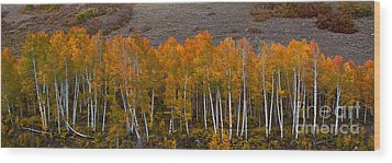 Aspen Band Wood Print by Steven Reed