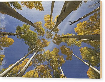 Aspen Color Wood Print by Sue Cullumber