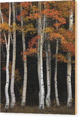 Aspen Contrast Wood Print by Leland D Howard