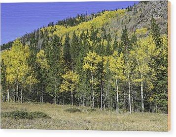 Aspen Foliage Wood Print by Tom Wilbert