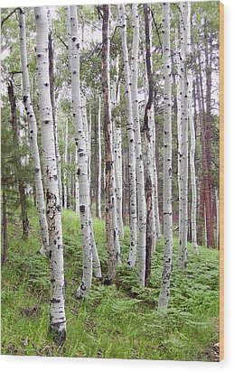 Aspen Forest Wood Print by Laurel Powell