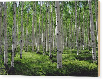 Aspen Glen Wood Print by The Forests Edge Photography - Diane Sandoval