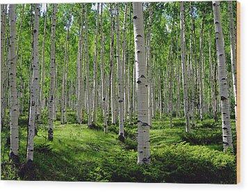Aspen Glen Wood Print