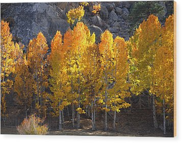 Aspen Gold Wood Print by Lynn Bauer
