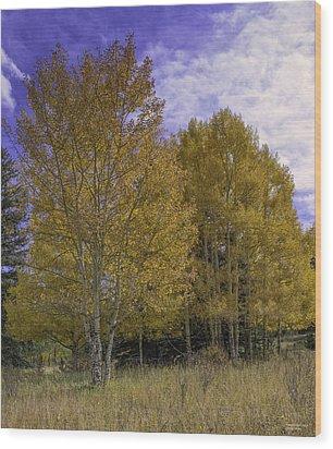 Aspen Goldrush Wood Print by Tom Wilbert