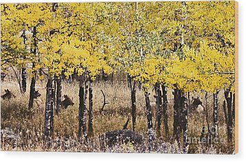 Wood Print featuring the photograph Aspen Grove Afternoon by Catherine Fenner
