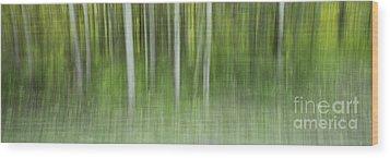 Aspen Grove  Wood Print by Priska Wettstein