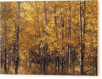 Wood Print featuring the photograph Aspen Grove Tahoe City by William Havle