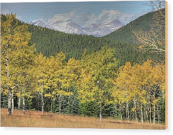 Wood Print featuring the photograph Aspen In Fall Mt Evans by Harold Rau