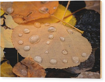 Aspen Leaf With Water Drops Wood Print