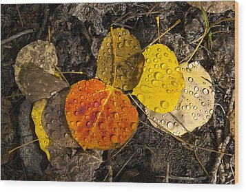 Aspen Leaves On Bishop Creek Wood Print