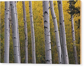 Aspen Light 2 Wood Print