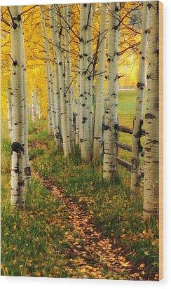 Aspen Path Wood Print by Ronda Kimbrow