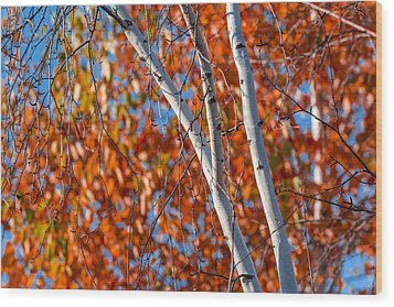 Wood Print featuring the photograph Aspen by Sebastian Musial