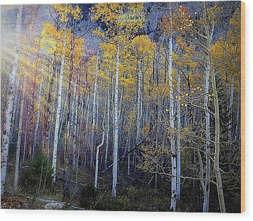 Aspen Sunset Wood Print by Karen Shackles