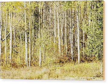 Aspen Sunshine Wood Print