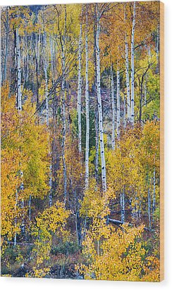 Aspen Tree Magic Cottonwood Pass Wood Print by James BO  Insogna