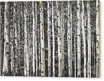 Aspen Tree Trunks Wood Print by Elena Elisseeva