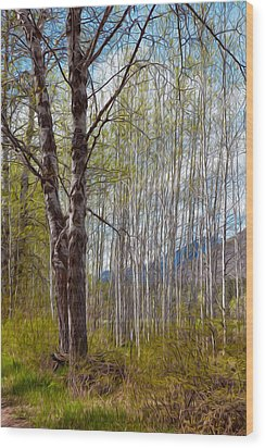 Aspen Trees Proudly Standing Wood Print by Omaste Witkowski
