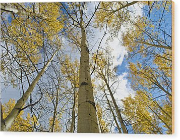 Aspen Tress To The Sky Wood Print