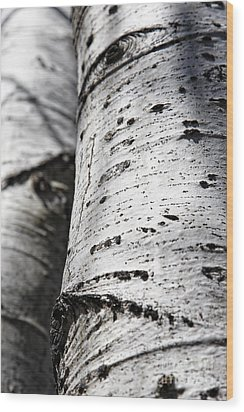 Wood Print featuring the photograph Aspen Trunks In Light And Shadow by Lincoln Rogers