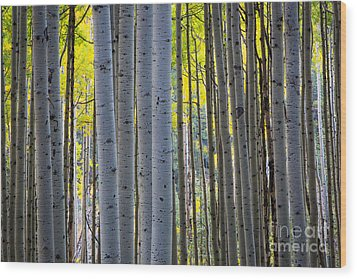 Aspen Trunks Wood Print by Inge Johnsson