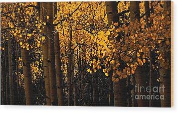Aspen Woods Wood Print