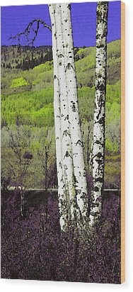 Aspens 4 Wood Print by David Hansen