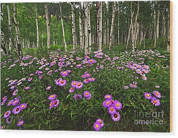 Aspens And Asters Wood Print