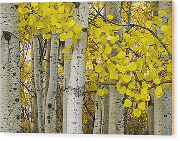 Aspens At Autumn Wood Print