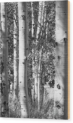 Aspens In B And W Wood Print
