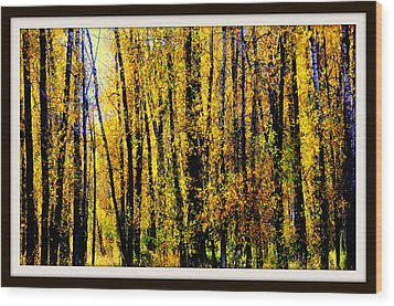 Aspens In Yellowstone National Park Wood Print by Aron Chervin
