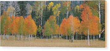 Aspens And Meadow-pan Wood Print