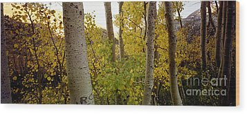 Aspens Wood Print by Ron Smith