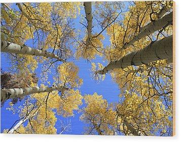 Aspens Skyward Wood Print by John Daly