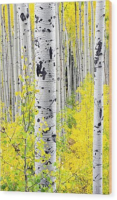 Aspens   Wood Print by The Forests Edge Photography - Diane Sandoval