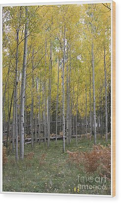 Wood Print featuring the photograph Aspen's Yellow Glow by Ruth Jolly