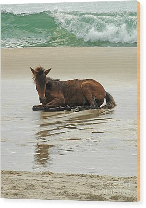 Assateague Foal Wood Print by Olivia Hardwicke