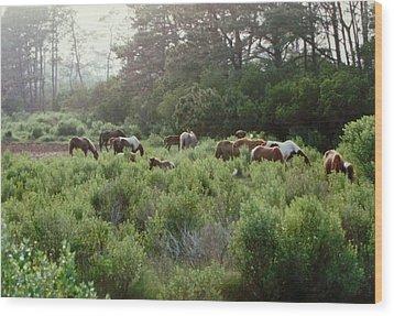 Assateague Herd Wood Print by Joann Renner