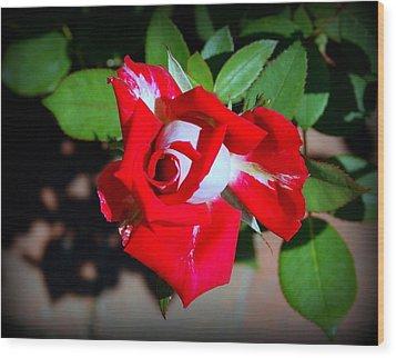 Assorted Flower 003 Wood Print