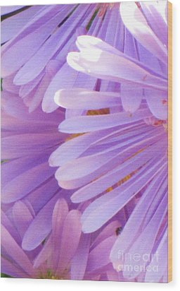 Wood Print featuring the photograph Aster Petals by Michele Penner
