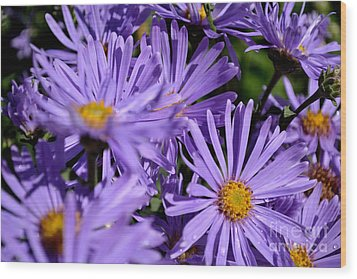 Wood Print featuring the photograph Asters After The Rain by Scott Lyons