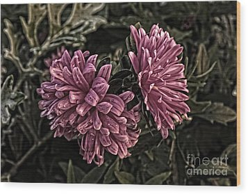 Wood Print featuring the photograph Asters In The Garden by Marjorie Imbeau