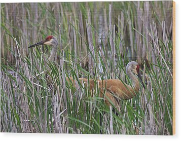 Wood Print featuring the photograph At Home In The Marsh by Gary Hall