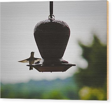 Wood Print featuring the photograph At The Feeder by Debra Crank