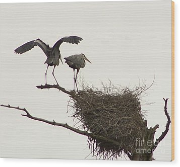 Wood Print featuring the photograph At The Rookery by Alice Mainville