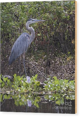 Atchafalaya Swamp Blue Heron Wood Print by D Wallace