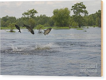 Atchafalaya Swamp Jumping Fish Wood Print by D Wallace