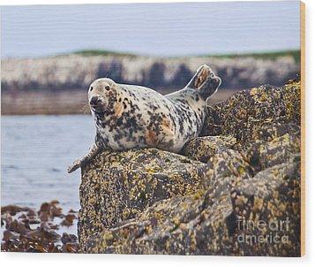 Atlantic Grey Seal Halichoerus Grypus Wood Print by Liz Leyden