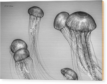 Atlantic Jellyfish - California Monterey Bay Aquarium Wood Print